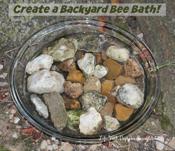 backyard bee bath
