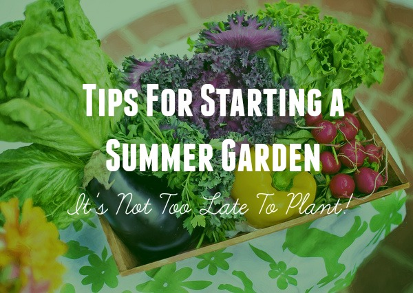 Tips For Starting a Summer Garden - It's Not Too Late To Plant!