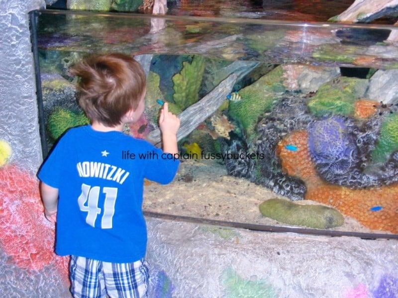 Visit Sea Life Aquarium In Grapevine This Spring Kids Go