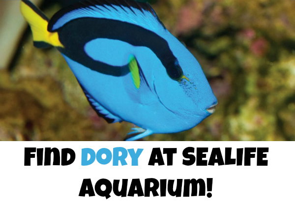 finding dory sealife