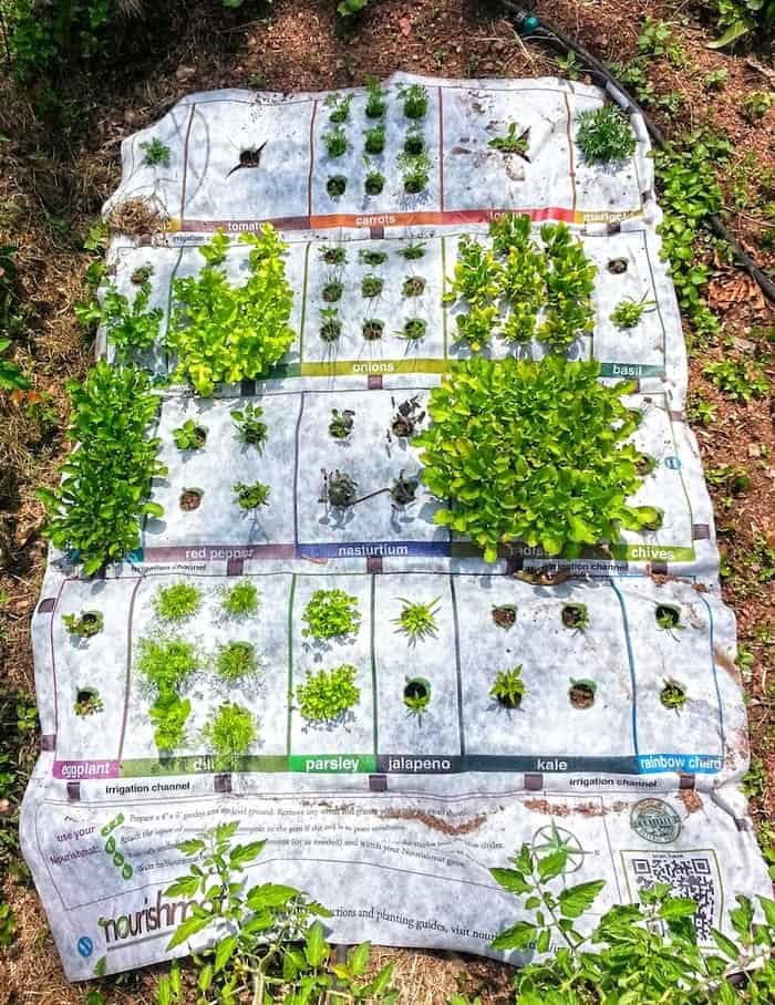 Gardening Is Made Fun and Easy with Nourishmat