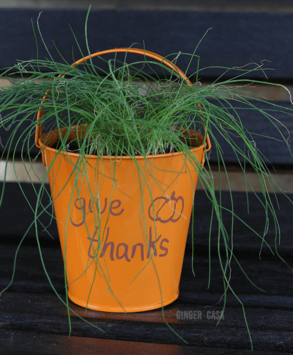 give-thanks-gift