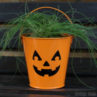 The Hairy Jack-O-Lantern:  An Easy Halloween Gift That Doubles As A Thanksgiving Gift!