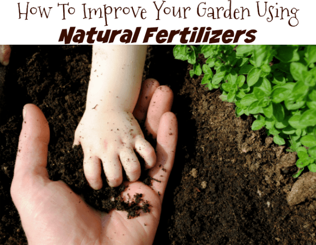 kid friendly organic gardening