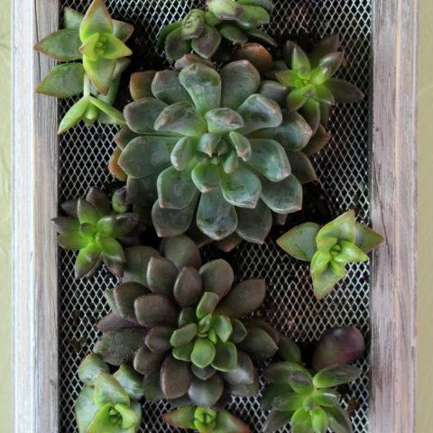 DIY Succulent Wall Hanging