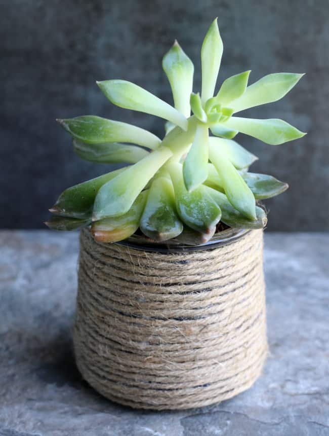 Diy Succulent Planters Repurpose Glass Yogurt Jars