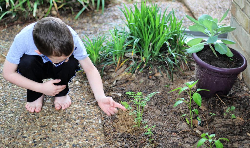 children's vitamins for immunity support - garden