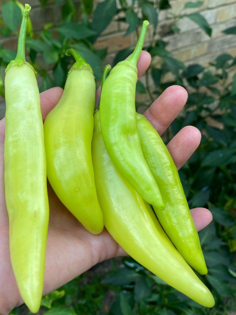 garden banana peppers